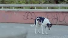 Trementina 'Oh Child' music video