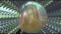 Sunbeam Sound Machine 'Real Life' Music Video
