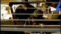 GZA 'Breaker, Breaker' Music Video