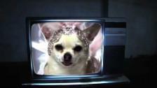 Marracash 'Cani pazzi' music video