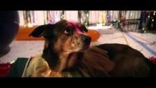 Eels 'Kinda Fuzzy' music video