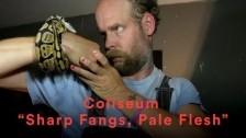 Coliseum 'Sharp Fangs, Pale Flesh' music video