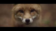 Sigur Rós 'Ekki múkk' music video