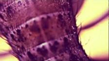Simian Mobile Disco 'Gizzard' music video