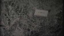 Zebra Pulse 'These Hands Sparkle Like Lemons' music video