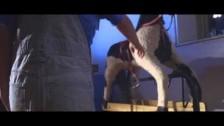 Gengahr 'Powder' music video