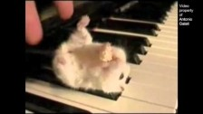 Parry Gripp 'Hamster On A Piano (Eating Popcorn)' music video