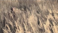 Markéta Irglová 'Fortune Teller' music video