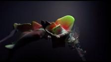 Björk 'Tabula Rasa' music video