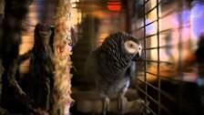 PJ Harvey 'England' music video