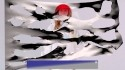 Holly Herndon 'Interference' Music Video