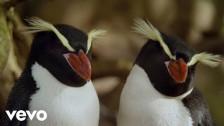 James Blake 'I'll Come Too' music video