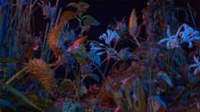 Floating Points 'Last Bloom' music video