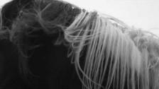 Hilary Woods 'Prodigal Dog' music video