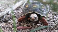 Parry Gripp 'Turtle' music video