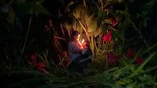 Helena Deland 'Lylz' music video
