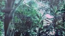 Pinkshinyultrablast 'Umi' music video
