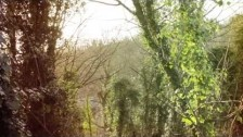 Wyldest 'Cruel Dusk' music video