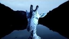 Hilary Woods 'Bathing' music video