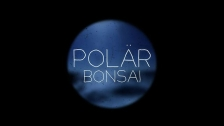 Polär 'Bonsai' music video