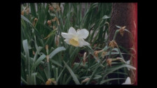 Sabri 'Oh Honey' music video
