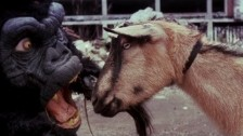 The Black Dahlia Murder 'Goat Of Departure' music video