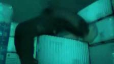 Meshuggah 'Rational Gaze' music video