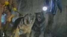 Falco 'Jeanny' music video