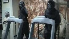 TaintStick 'Monkeys of War' music video