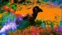 Dan Deacon 'USA' Music Video