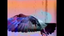 Just Another Snake Cult 'Birds Carried Yr Song Through the Night' music video