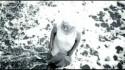 Mudvayne 'Death Blooms' Music Video