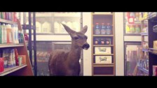 Owl City 'Deer In The Headlights' music video