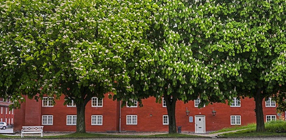 Spring flowers bloom over Copenhagen's Kastellet military barracks, which still function as a part of the Danish military establishment