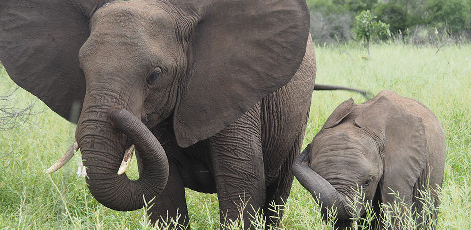 In South Africa, there is no shortage of elephant spotting