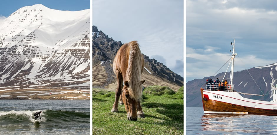 From left: surfing in the Arctic Ocean; an Icelandic horse; whale-watching