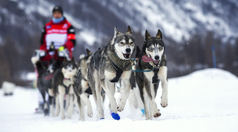 Dogs of the Dow: These dogs keep running!