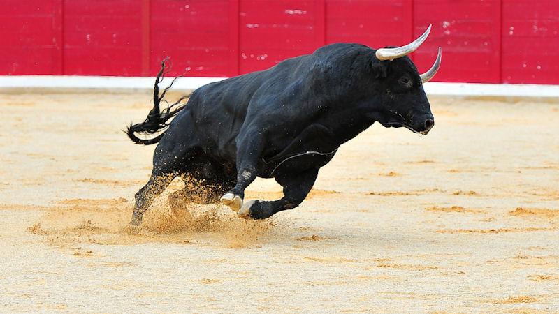 Bulls charge back