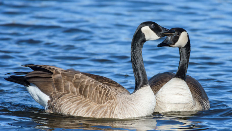 Canada Goose Holdings (GOOS) Stock Falls -27.7% This Week: What's Next?
