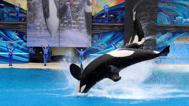 SeaWorld (SEAS) Stock Rises 15.5%: What's Next?