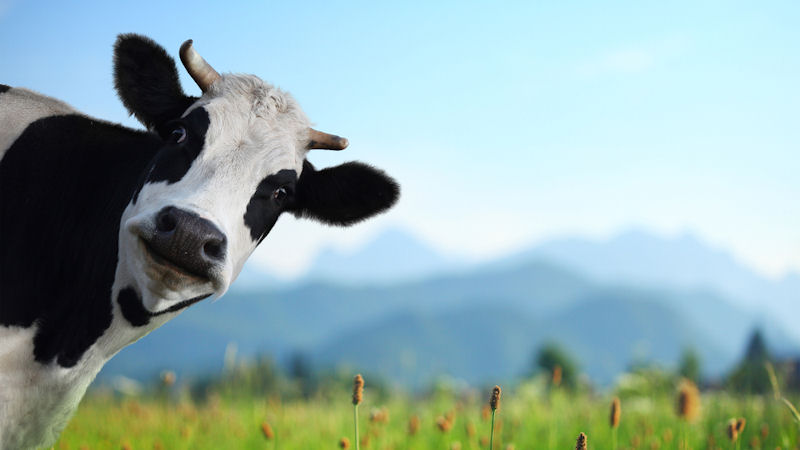 Beyond Meat (BYND) Stock Gains 98% This Month: What's Next?