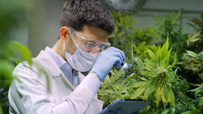 Should You Accumulate Green Thumb Industries Inc (GTBIF) in Drug Manufacturers - Specialty & Generic Industry?