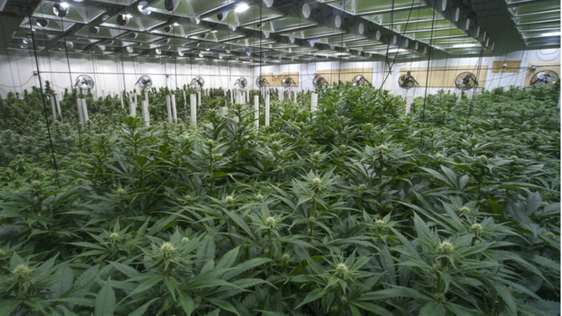 How Will the Market React to Aphria Inc (APHA) Stock Getting a Bearish Rating