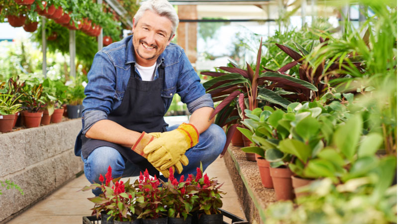 Should Home Improvement Retail Stock GrowGeneration Corp (GRWG) Be in Your Portfolio Thursday?