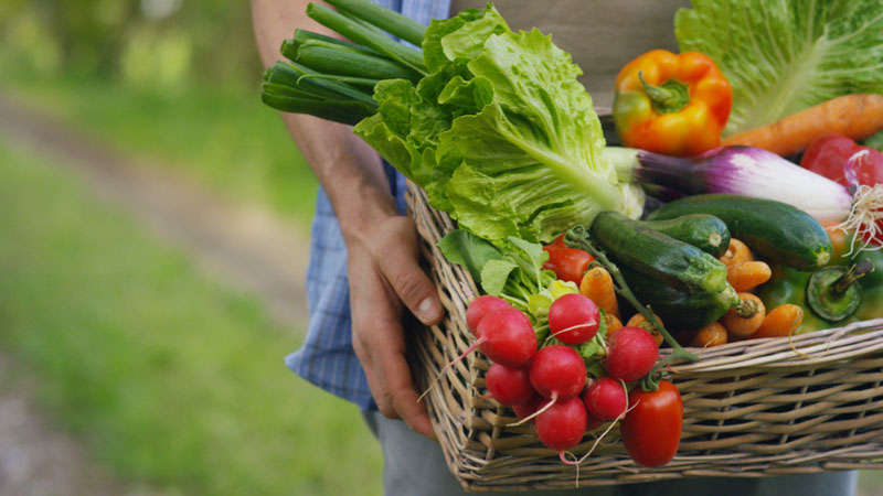 Village Farms International Inc (VFF) is down -20.00% in a Week, Should You Buy?