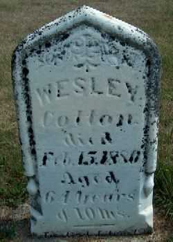 COTTON, WESLEY - Allamakee County, Iowa   WESLEY COTTON