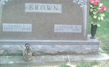 BROWN, ARTHUR E. - Clayton County, Iowa | ARTHUR E. BROWN