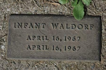 WALDORF, INFANT - Clinton County, Iowa | INFANT WALDORF