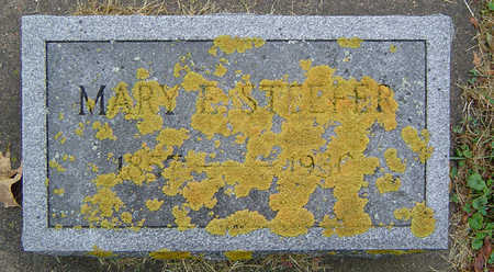 STEEFER, MARY ELIZABETH - Delaware County, Iowa | MARY ELIZABETH STEEFER