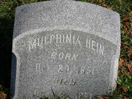 HEIN, MULPHINIA - Linn County, Iowa | MULPHINIA HEIN
